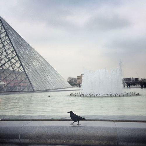Bird Pyramide Du Louvre Paris Winter