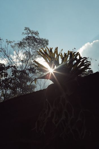 Sunlight Sunbeam Lens Flare Back Lit Fern Rooftop Garden ชายผ้าสีดา