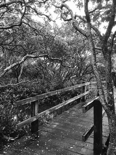 Tree Nature Railing Tranquility Outdoors Beauty In Nature Landscape Moment Lens Moment Wide @moment IPhoneography Rainy Days Black & White Black And White Light And Shadow Mai Po Nature Reserve Cloud - Sky Nature Trees Built Structure Group Of Trees Footbridge Branch Scenics Landscapes