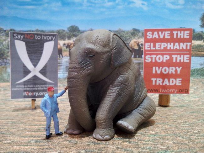Save The Elephants Elephant Animal Wildlife African Elephant Ivory White