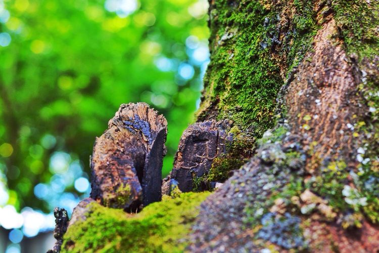Close-up of mossy tree trunk