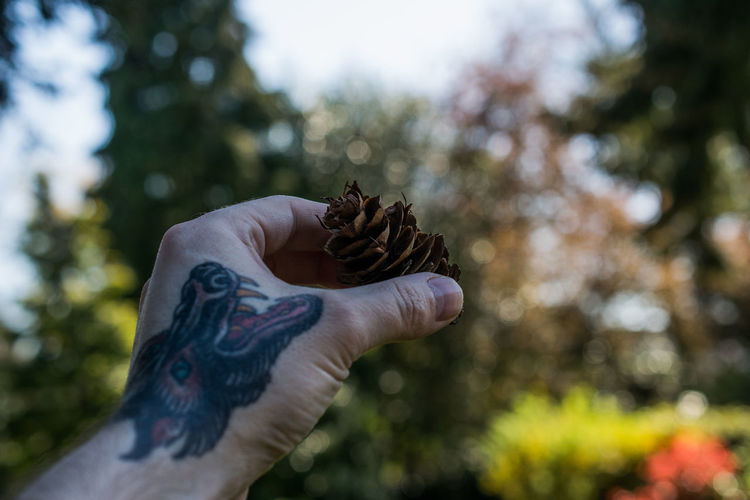 Adult Adults Only Bokeh Close-up Day Focus On Foreground Holding Human Body Part Human Hand Leisure Activity Nature One Person Outdoors People Real People Tattoo Tree Wolf Wolf Tattoo