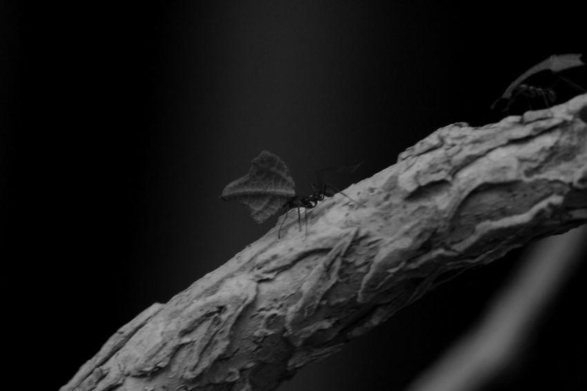 Fourmi Noiretblanc Blackandwhite Zoodevincennes Photooftheday Photography Follow Leaf 🍂 Taking Photos Tree
