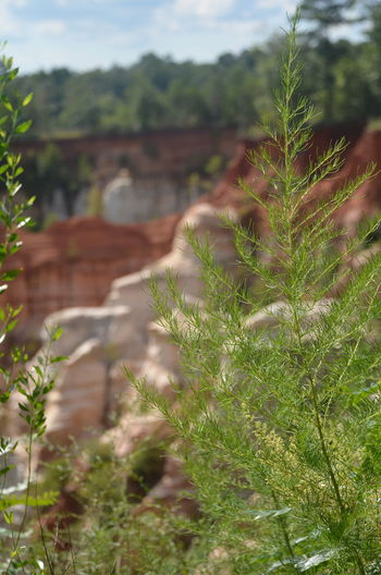 Providence Canyon State Park, Georgia, United States Beauty In Nature Close-up Day Field Focus On Foreground Freshness Green Color Growth Land Landscape Leaf Nature No People Outdoors Plant Plant Part Selective Focus Sky Tranquility Tree