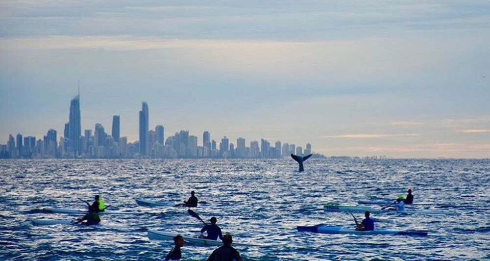 When kayaking in the Gold Coast, don't be surprised if a whale pops up to say g'day! 🐋 Water Sea Architecture Built Structure Waterfront Building Exterior Sky Travel Destinations City Weekend Activities Tranquility Scenics Tourism Tranquil Scene Flying Vacations Coastline Nature Skyscraper Enjoyment