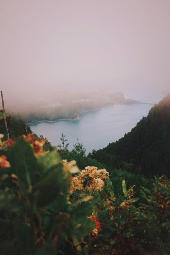 It was such a great experience exploring this island Azores Fog Adventure Travel Plant Sky Beauty In Nature Water Sea Nature Scenics - Nature Tranquility No People Land Tranquil Scene Outdoors Day Idyllic Cloud - Sky Tree Autumn Mood
