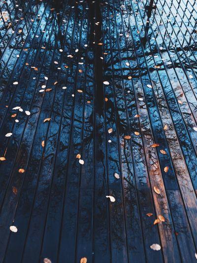 Reflection Of Trees On Wet Boardwalk