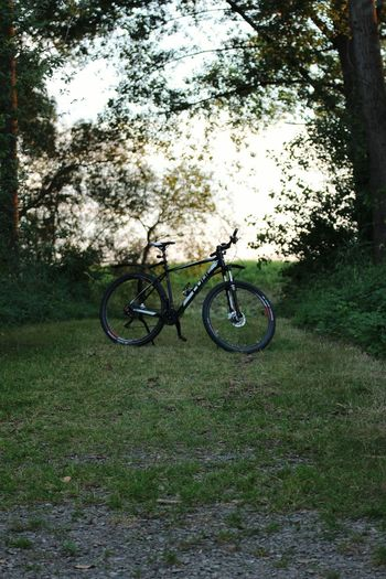 Bicycle Stationary Transportation Green Color Mode Of Transport Land Vehicle Grass Day Nature Outdoors No People Tree Germany🇩🇪 Nature Backgrounds Cube Bikes Cube Bike Bikesaroundtheworld