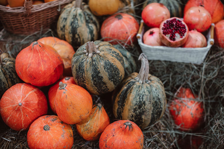 Lots of fresh bright orange pumpkins lying in the hay. autumn decoration. october and november.