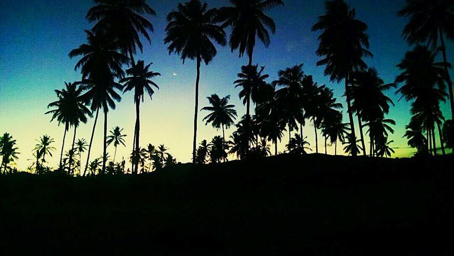 Só agradecer! #mar #praia #natureza #Bahia #Brazil #salvador #verão #sun Salvador Bahia #beach #pordosol #stelamaris #coqueiro #dégradé