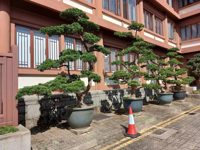 Potted plants on balcony of building