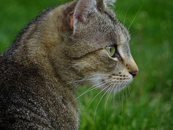 Cat Focusing