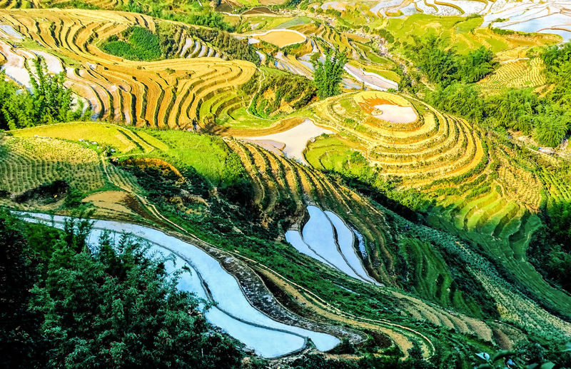 High Angle View Of Cultivated Land In Asia
