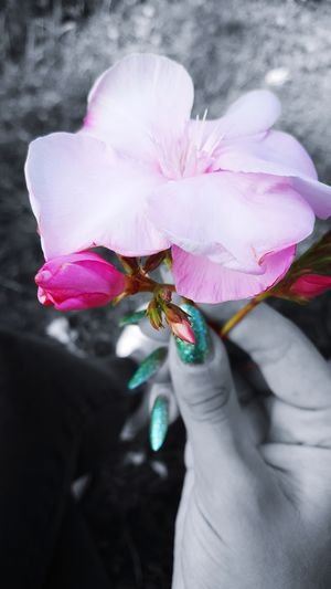 The Flower Life