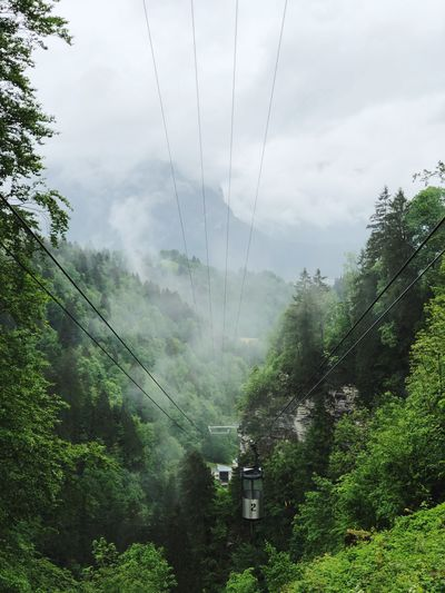 Overhead cable car amidst trees in forest