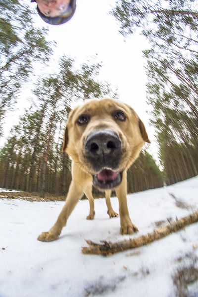 Animal Themes Close-up Day Dog Domestic Animals Fisheye Fun Mammal One Animal Outdoors Own Style  Pets Trip