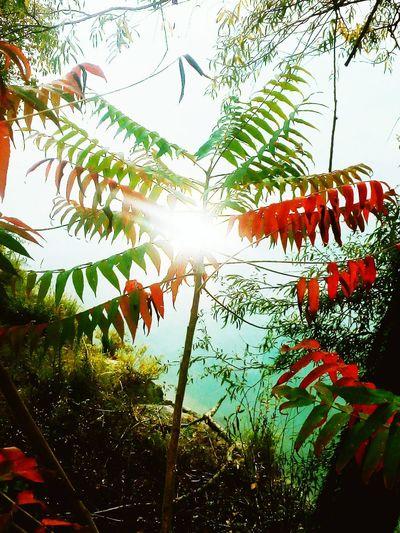 La Dora e la natura con arte. Ivrea, TO. #ivrea #canavese #piemonte #fiume #Rio #colors #colore #Colores #foglie #autunno #autumn #natura #naturaleza #Nature  #hojas Day Outdoors Tree Growth Nature No People Low Angle View Plant Beauty In Nature
