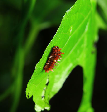 Animals In The Wild Green Color Green Color Plant Beauty In Nature Nature Animal Wildlife Green Colors Insect One Animal