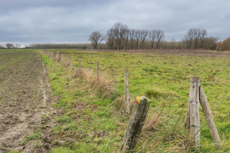 Sint Jorisweg, Oostburg Landscape Field Fence Boundary Tranquil Scene Cloud - Sky Treeline Sony A77ii Zeeuws Vlaanderen Zeeland  The Netherlands BobWire