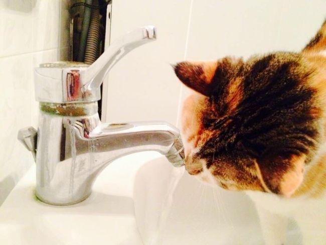 Drink Drinking Drinking Water Plumb Plumber Cat Cats Somethingtodrink Water Waterfall Feline Feline Friend