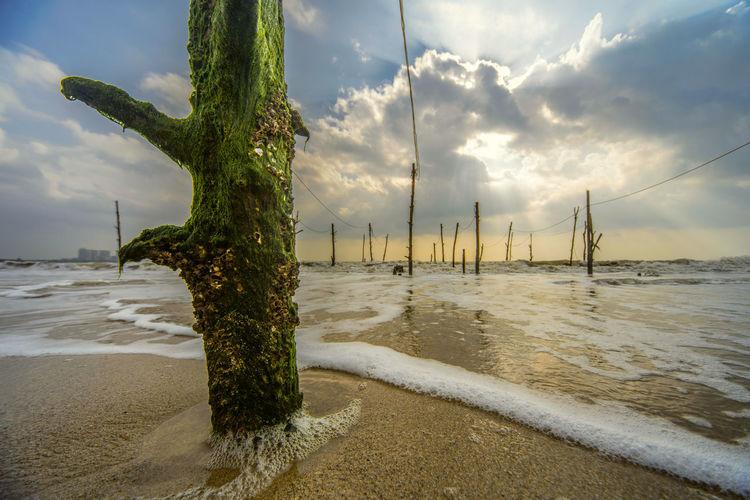 层层叠沙贝,厚厚老青苔,半生湖海立,一任潮去来。 beach Beach Sea Cloud - Sky No People Outdoors Sunlight Pole