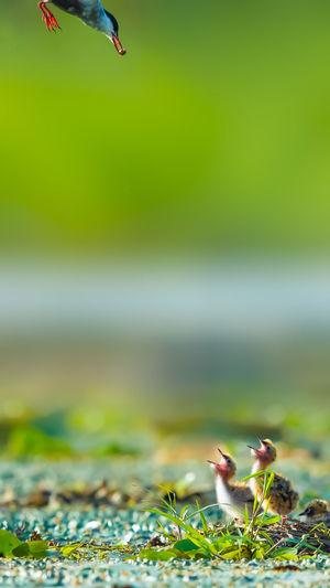《渴望》,摄于高邮湖 Bird