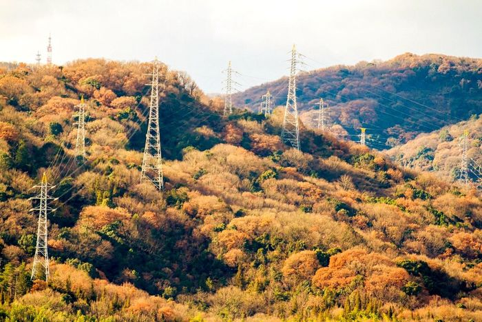 How many towers can you see? Telegraph Pole Power Lines Electricity  Trees Nature And Man 鉄塔 鉄塔♡Love