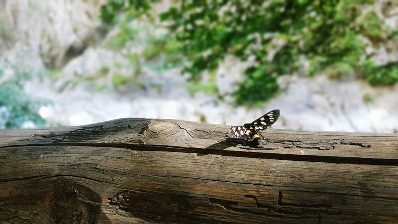 Rugova Taking Photos Enjoying Life Sunny Day Beauty In Nature Butterfly Butterfly Collection