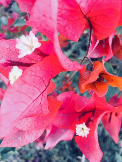 first eyeem photo Floral Bright Close-up Nature AI Now