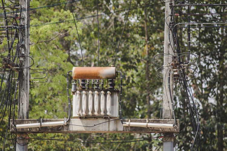 Electricity transformer against trees
