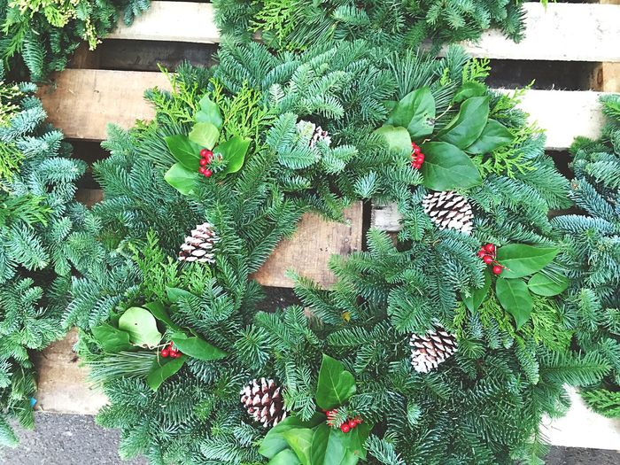 Mahoney's Garden Center Flowers,Plants & Garden Wreaths Holidays Taking Photos