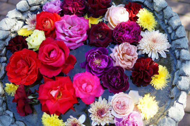 EyeEm Best Shots Eyeem Best Shots Flowers EyeEm Nature Lover Flower Flowers In Bloom Rose - Flower Roses