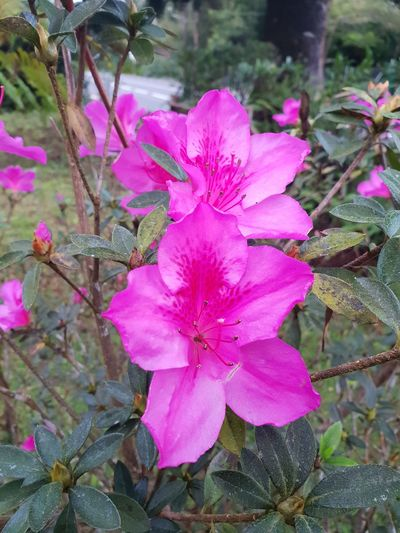 Flower Head Flower Pink Color Close-up Plant
