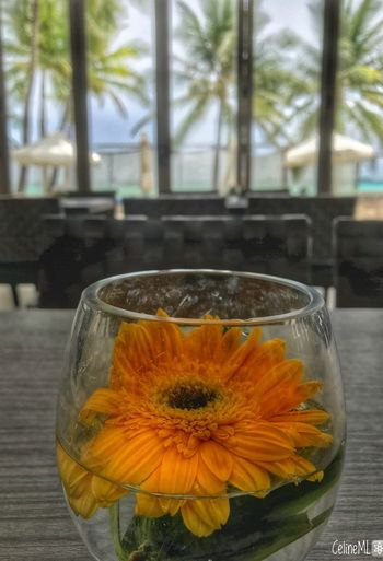 Flower Bythebeach Focus On Foreground Relaxing Moments