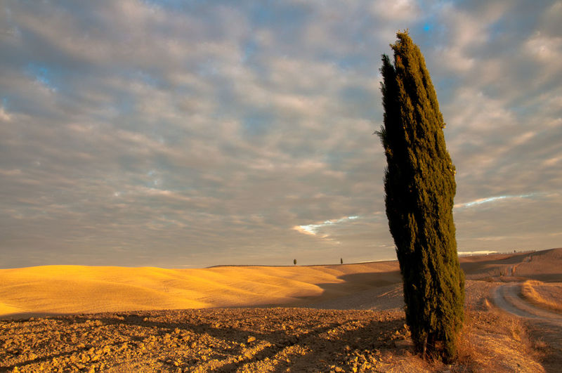 Tree at desert against cloudy sky