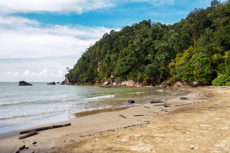 Paku beach in Bako National Park, Borneo, Malaysia Bako National Park Beach Beauty In Nature Borneo Coastal Feature Coastline Day Jungle Landscape Nature No People Outdoors Rainforest Sand Sea Sky Tree Tropical Climate Water