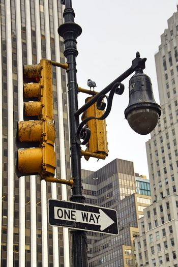 Adapted To The City Architecture Bird Building Exterior Camera City City Life Day Hidden New York New York City No People One Way Outdoors Pidgeon  Road Sign Sky Skyscraper Stoplight Surveillance Traffic Lights Travel Destinations Live For The Story Paint The Town Yellow