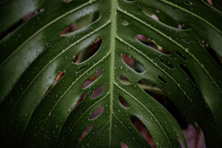 Full frame shot of raindrops on leaves