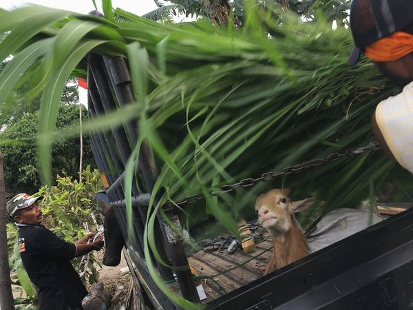 Preparation for Eid Adha in Medan Animal Animal Themes Plant Vertebrate Animal Wildlife One Animal EyeEmNewHere Glass - Material Animals In The Wild Day Transparent Mammal No People Nature Growth Cat High Angle View Animals In Captivity Green Color Feline Outdoors