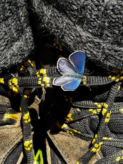 Close shot butterfly on hiking shoe Himmelblauer Bläuling Hiking Shoes Grass Yellow Deep Blue Blue Small Butterfly Flying Animals Animal Butterfly - Insect Shadow Sunlight High Angle View Close-up Insect Butterfly