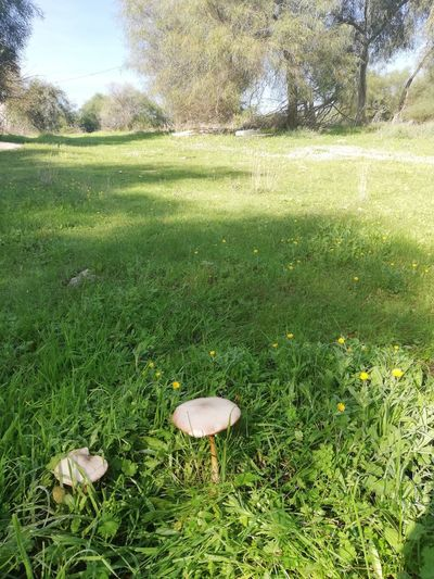 A slice of nature Mushrooms Trees Tree Golf Field Sunlight Grass Green Color Countryside Fungus Growing