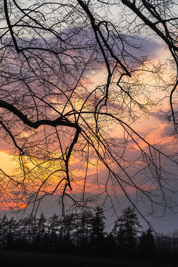 Low angle view of silhouette bare trees against sky during sunset