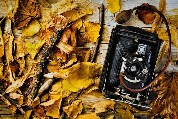 Directly Above Shot Of Old Camera With Fallen Autumn Leaves On Table