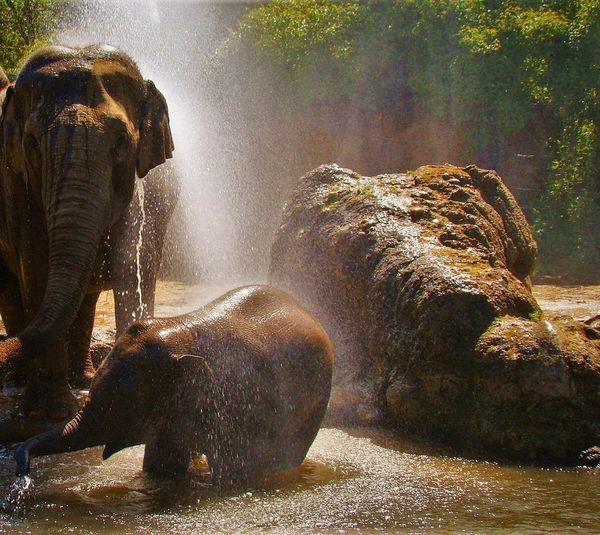 Elephant Elephants Elephants Bathing Youngelephant Animal Animals Animalphotography Animal Photography Animal_collection Animal Lover EyeEm Animal Lover Waterplay Hotday