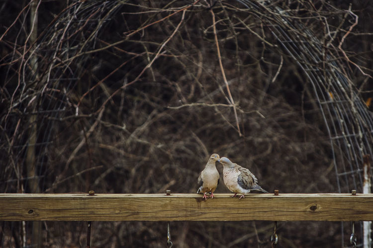 View of birds on tree branch