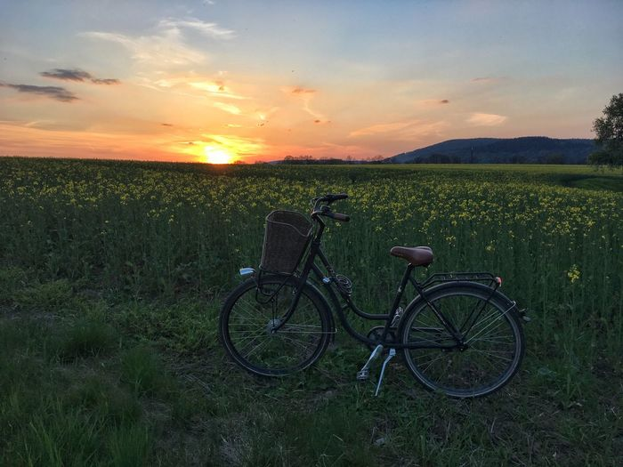 Bicycle in front of a rapeseed field at sunset Bicycle Sunset Field Grass Nature Transportation Growth Sky Stationary Landscape Tranquil Scene Mode Of Transport Land Vehicle Scenics No People Tranquility Outdoors Beauty In Nature Day Landscapes Landscape_Collection Rapeseed Field Rapeseed View Lovely The Great Outdoors - 2017 EyeEm Awards