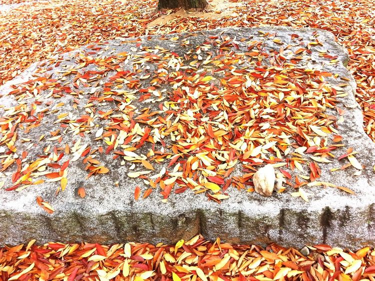 Leaf Autumn Day Nature Maple Leaf Maple Trees Maple Seeds 낙엽 Season  Seasons Change Leaf 🍂 Leaf Fall Fallen Leaves