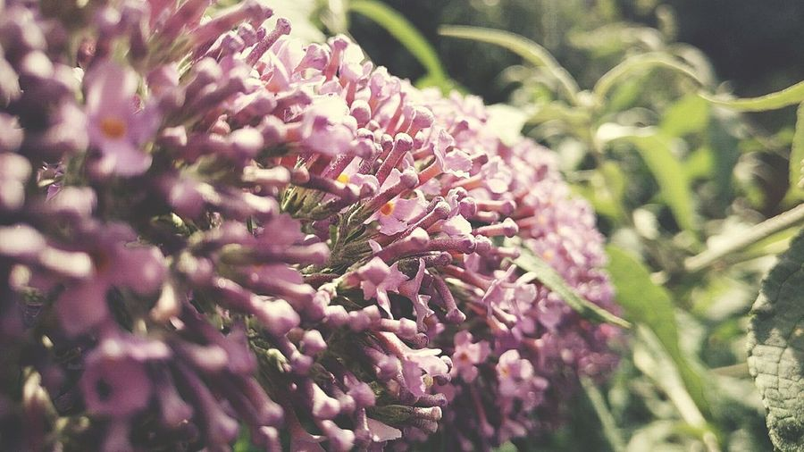 lavender color love Selective Focus Plant Outdoors Flower Growth Nature Day Rural Scene Beauty In Nature No People Fragility Freshness Flower Head Close-up Tadaa Community Light