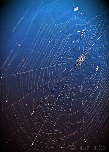Spiderweb Natural Light Florida Nature Travel EyeEm Nature Lover Eye4photography  Everyday Beauty Animal_collection Nature_collection