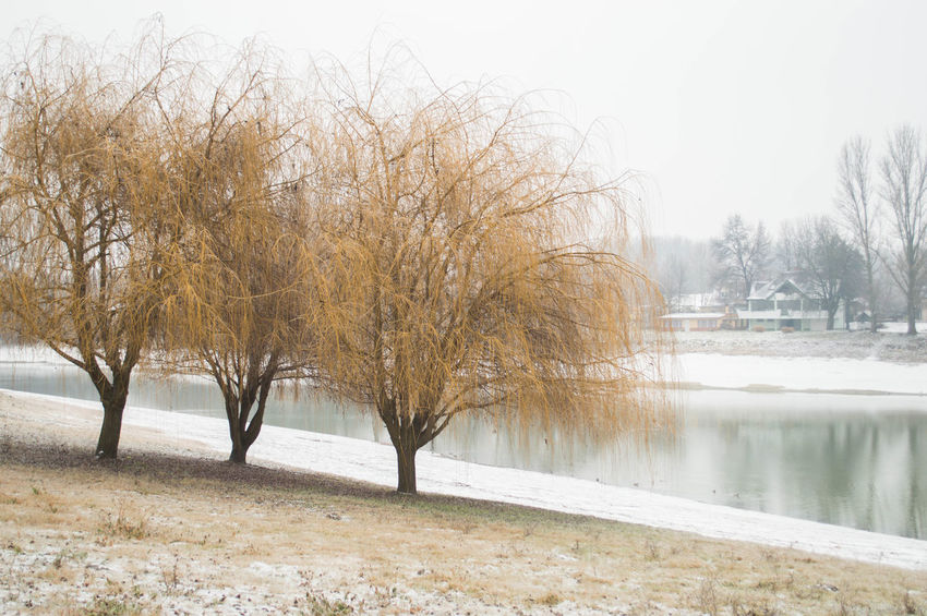 Sleet Freezing Freezing Rain Frozen Ice Nature Rain Sleet Tree Winter